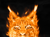 Lince de Fuego [Tutorial Photoshop]