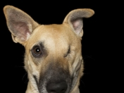 12 retratos de perros que son perfectamente imperfectos