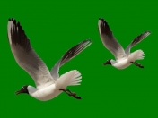 Aves png 1/4