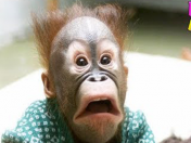 Funny cute monkeys will make you laugh hard